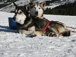 Grandvalira Mushing - Trineo de perros