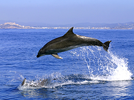 Excursion to Gibraltar - Rock tour Excursions in Costa del Sol