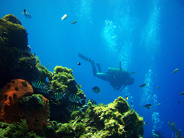Diving short course - San Andres
