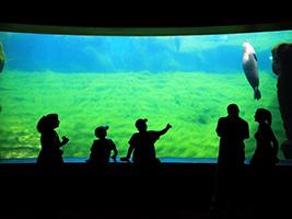 Hoteles valencia ciudad de las artes y las ciencias for Promociones oceanografic
