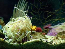 Barcelona Aquarium - Hotels in Barcelona