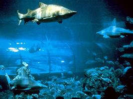 L'Aquàrium de Barcelona - Hoteles en Barcelona
