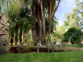 Bioparc Fuengirola - Hoteles en Rincón de la Victoria