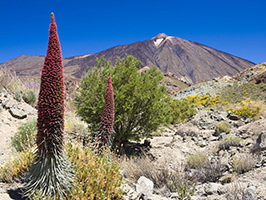 Cañadas del Teide Half Day Tour with Optional Cable Ride, Tenerife