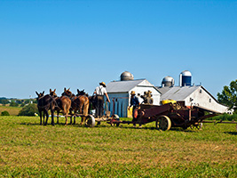 One day Excursion to Philadelphia & Amish Country Tour, New York Area - NY