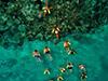 Marinarium - glass bottom boat and snorkel