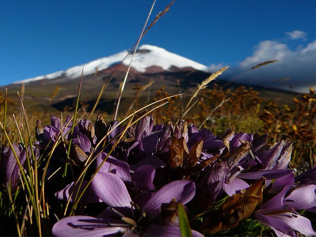 Excursão ao Parque Nacional Cotopaxi