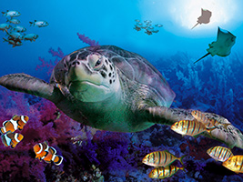 Ticket Sealife - Benalmadena
