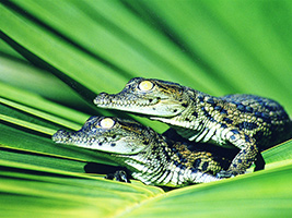 Ticket Crocodile Park