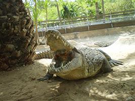 Crocodile Park - Hoteles en Estepona