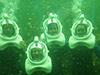 Seaquarium Sea Trek Encuentro con corales