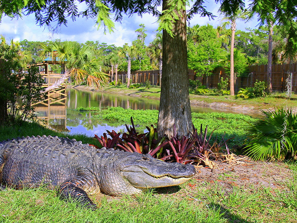 Wild Florida Airboat Tour In English | Hotels, Cars