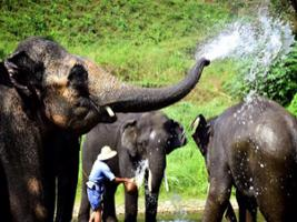 Mahout Training At Mae Tang Elephant Camp From Hotel Inside Chiang Mai City Only, Chiang Mai