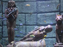 Aquarium solo entrada excursiones en antalya for Precio entrada aquarium
