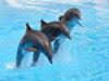 Nado con focas Seaquarium