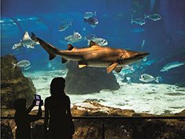 Entrada al aquarium de barcelona for Precio entrada aquarium