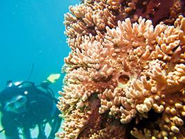 Arenal Scuba Diving, Ibiza