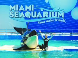 Seaquarium with Transportation, Miami Area - FL