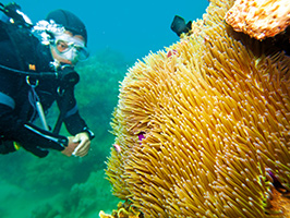 Discover Scuba Diving in English, Ibiza