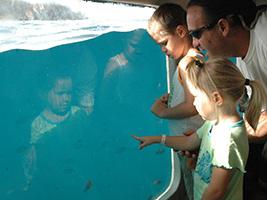 Entrada Catamaran Cormorán Visión Submarina