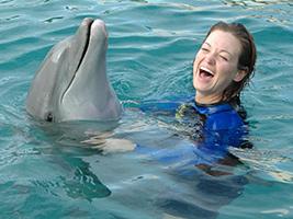 Seaquarium Dolphin Encounter Interaction, Miami Area - FL