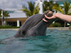 Experiencia en el Seaquarium Dolphin Odissey
