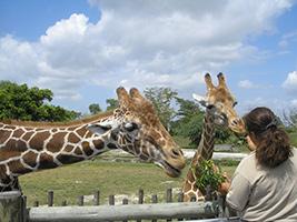 Zoo Miami Interactive Safari, Miami Area - FL
