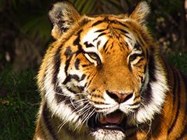 Zoo Miami, Miami Area - FL