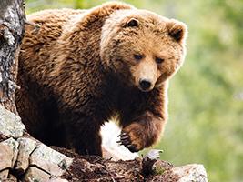 Entrada Parque de Animales Naturlandia Andorra - Hoteles en Andorra