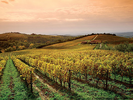 The Wonders of Chianti, Florence