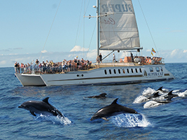 Programok/Leírások Idegen Nyelven Dolphin Watching Cruise