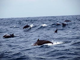 Nusa Dua dolphin cruise, Bali