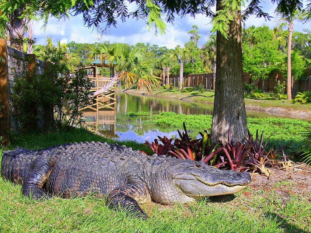 Wildlife Park Safari