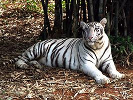 Excursion to Vandalur Zoo - private, Chennai (Madras)