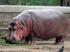 Visit to Delhi Zoo, Delhi and NCR