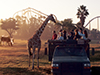 Busch Gardens Serengeti Safari Tour