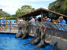 Sea Life Park with transport, Hawaii - Oahu - HI