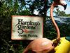 Visita a Flamingo Gardens
