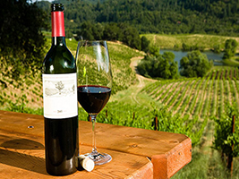 Food and wine lovers tour to Hunter Valley, Sydney - NSW