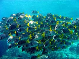 Scuba Diving in Acapulco, Acapulco