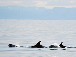 Whale Watching Tour, Reykjavik