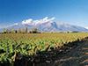 Experiencia vinícola Concha y Toro – Tour Marqués