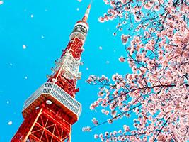 Tokyo's Best Cherry Blossom Spots Tour, Tokyo
