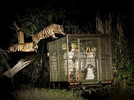 Night Safari Tour, Bali