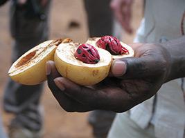 Zanzibar Spice Tour, Zanzibar
