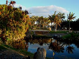 Palmetum Santa Cruz de Tenerife, Tenerife