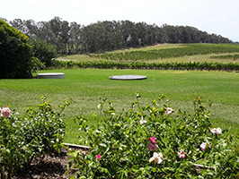 Hunter Valley Wine Crawl - Private, Sydney - NSW