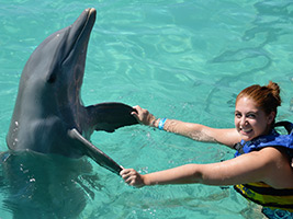 Dolphin Swim Adventure, Montego Bay (and vicinity)