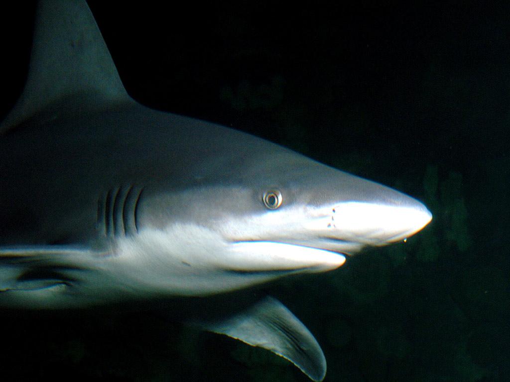 shark reef aquarium wise do good travelling