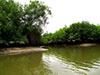 Churute Mangroves Tour